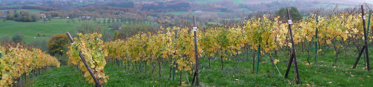 Wines in Belgium