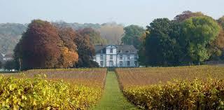vignoble et vue chateau automne